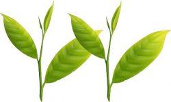 新茶-とは-一番茶-健祥-八十八夜-甘み-旨み-グリーン-ワールド-八女-2番茶-3番茶-飲み方-時期-予約-購入 (1)